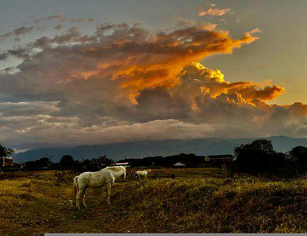 Sunset, Horses, Sky, Horse, Landscape, Nature, Sun