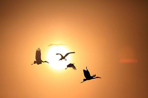 Sunset Afternoon, The Stork Flies Back To The Nest
