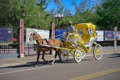 Horse, Car, Horses, Noble, Transport, Animals