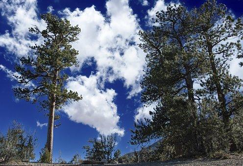 Trees, Mountain, Mt, Charleston, Sky, Campsite, Foliage