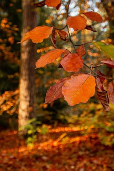 Autumn, Leaves, Fall, Forest, Nature, Brown, Trees