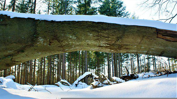Tree, Vista, Snow, Trees, Forest, Winter, Nature
