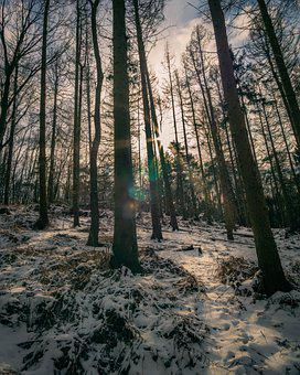 Nature, Forest, Snow, Landscape, Winter, Wintry, Cold
