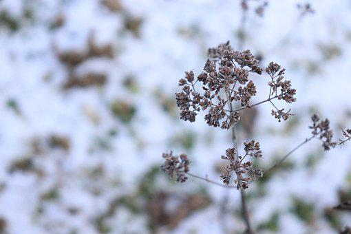 Winter, Freezing Cold, Ice Cold, Dried Plant, Frosty