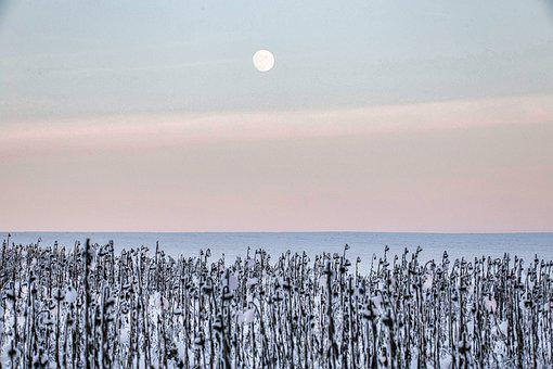 Freezing Temperatures, Minus, Frost, Arctic, Winter