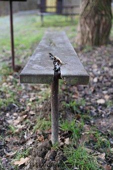 Bench, Autumn, Foliage, Nature, November, Wood, Sit