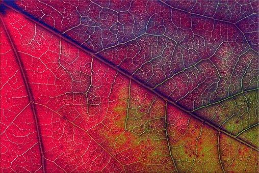 Leaf, Foliage, Plant, Nature, Environment, Autumn