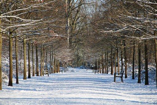 Park, Snow, White, Tree, Trees, Bank, Banks, Winter