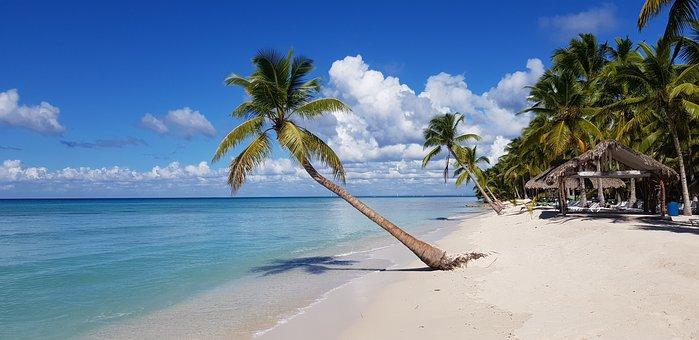 Beach, Palm Trees, Sea, Coast, Coastline, Seashore