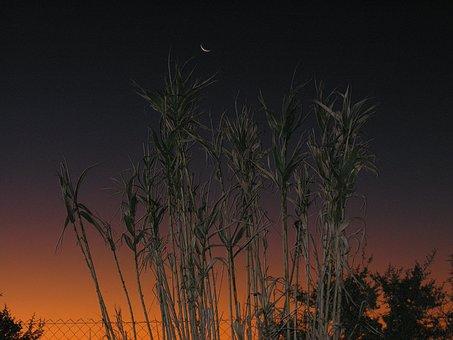 Moon, Plants, Night, Sky, Nature, Flower, Landscape