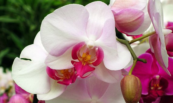 Orchids, Flowers, Colorful, Exotic, Plants, Potted, Bar