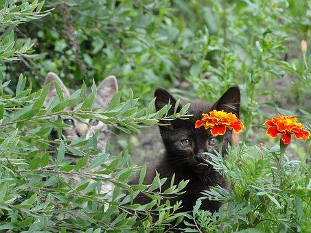 Flowers, Marigold, Garden, Foliage, Cats, Hidden