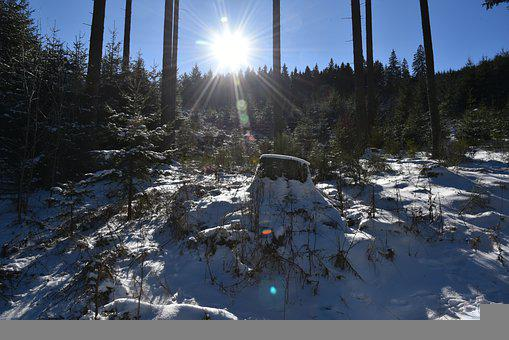 Forest, Sun, Snow, Remblinghausen, Meschede, Sauerland