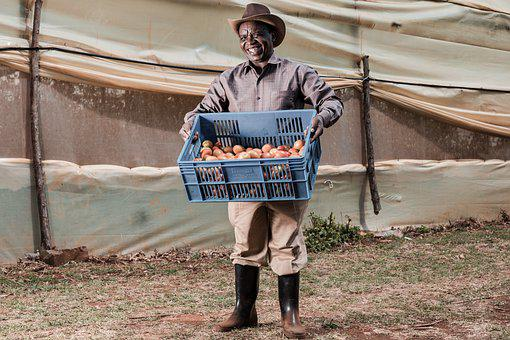 Man, Fruit, Crate, Worker, Job, Person, Travel
