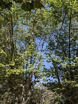 Tree Leaves, Sunny, Instagram, Nature, Happy, Summer