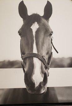 Horses, Animals, Gallop