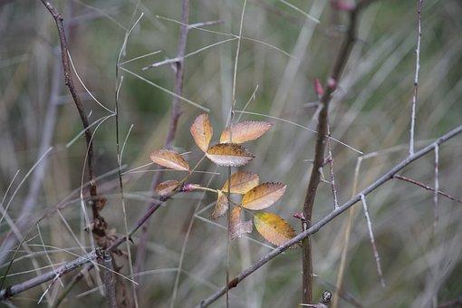 Rose Leaves, Winter, Nature, Leaf, Outdoor, Cold, Mood
