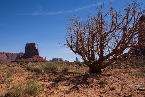 Monument Valley, Utah, Mesa, Dead Tree, Desert, Usa