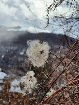 Winter, Plant, Snow, Lovers, Mountains, Sky, Clouds