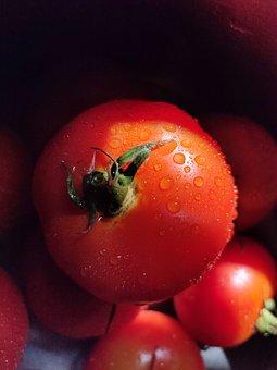 Tomato, Red, Water, Drops, Fruit, Vegetarian, Natural