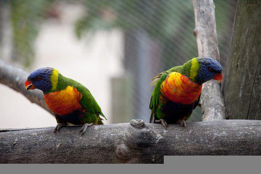 Bird, Macaw, Tropical, Nature, Colorful, Exotic, Beak