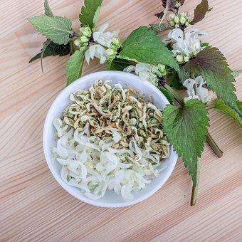 Flowers, Herbs, Dead Nettle, Nettle, Plant, Nature