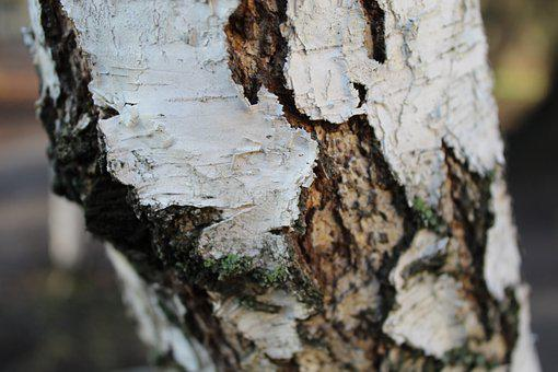 Texture, Background, Wood, Pattern, Nature, Structure