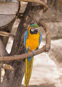 Macaw, Bird, Safari, Perched, Wood, Parrot, Animal