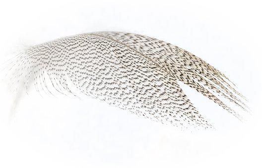 Feather, Bird, Nature, Plumage, Wildlife, Pattern