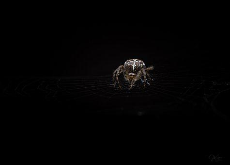 Spider, Nature, Insects, Environment, Predator, Alive