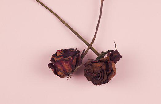 Roses, Dried Flowers, Background, Red Roses