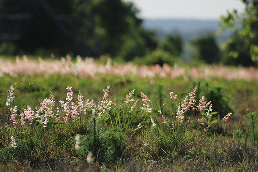 Field, Grass, Rural, Flowers, Weeds, Summer, Nature