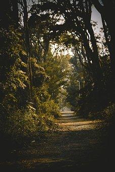 Forest, Jungle, Safari, Nature, Green, Rainforest