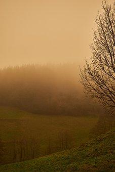 Trees, Fog, Sand, Dust, Sand Storm, Sahara Dust