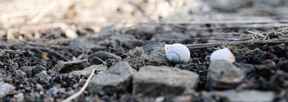 Snail, Shells, Rocks, Ground, Dirt, Garden, Surface