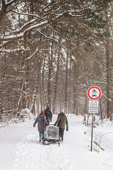 Snow, Baby Carriage, Hike, Trees, Pathway