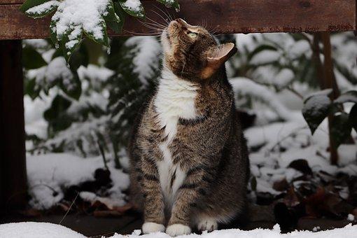 Cat, Tabby, Snow, Mackerel, Pet, Animal, Domestic Cat