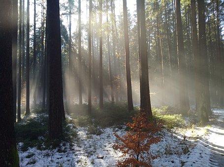 Trees, Snow, Sunlight, Sunbeams, Sunrays, Woods