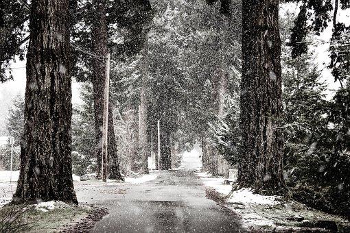 Road, Trees, Blizzard, Snow, Snowing, Snowfall, Winter