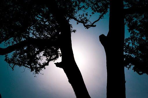 Silhouette, Sunset, Forest, Tree, Sun, Nature, Dusk