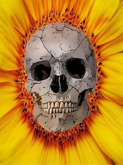 Skull, Sunflower, Skeleton, Head, Floral, Bloom