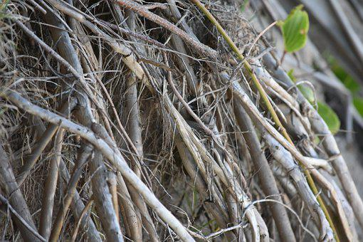 Tree Roots, Beach, Tree, Root, Nature, Mangrove, Roots