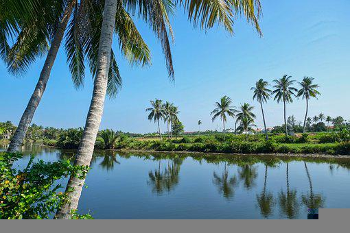Asia, Vietnam, Green, Palm Ree, Traditional, Nature