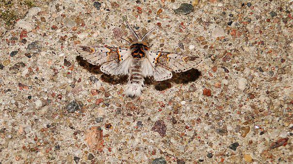 A Moth, Camouflage, Butterfly Night, Wall, Insect