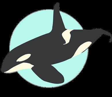 Whale, Orca, Ocean, Sea, Nature, Animal, Fish