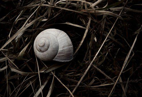 Shell, Nature, Snail, Shells, Natural, White, Black