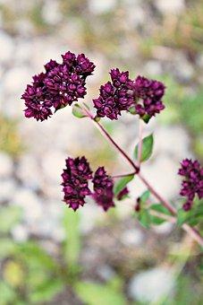 Wild Flower, Wild Plant, Meadow, Flower Meadow, Flower