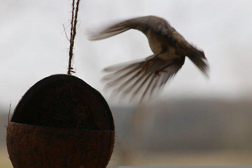 Winter Bird, Bird Flight, Departure