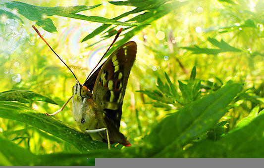 The Painted Lady, Antennae, Eye, Model, Insect