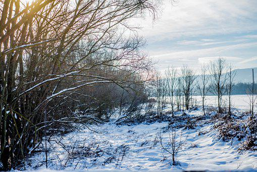 Snow, Trees, Wood, Winter, Landscape, Nature, Cold